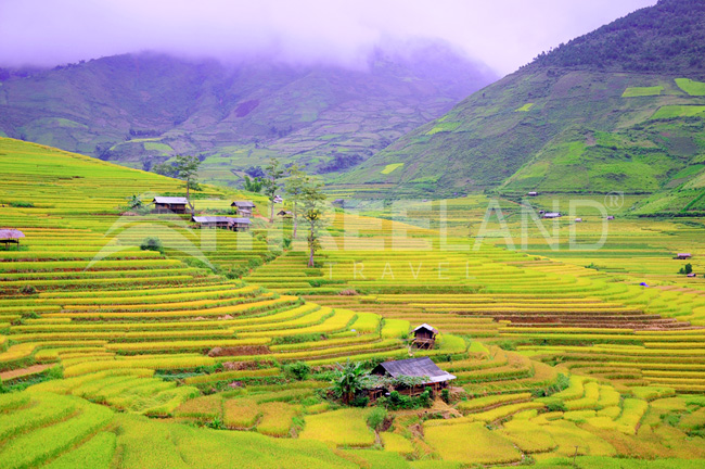 Mu Cang Chai, Northeast