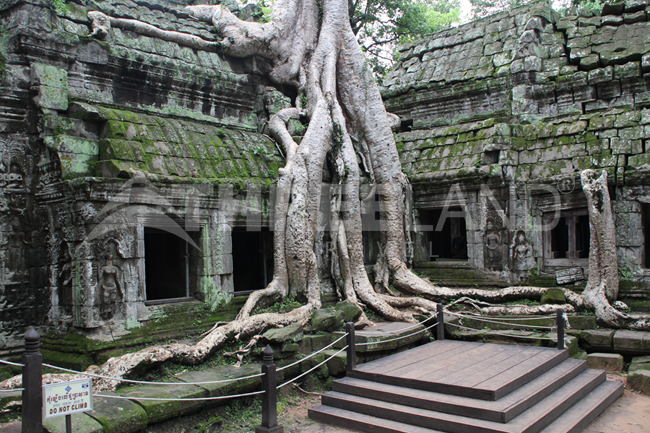 Ta Prohm – Siem Reap