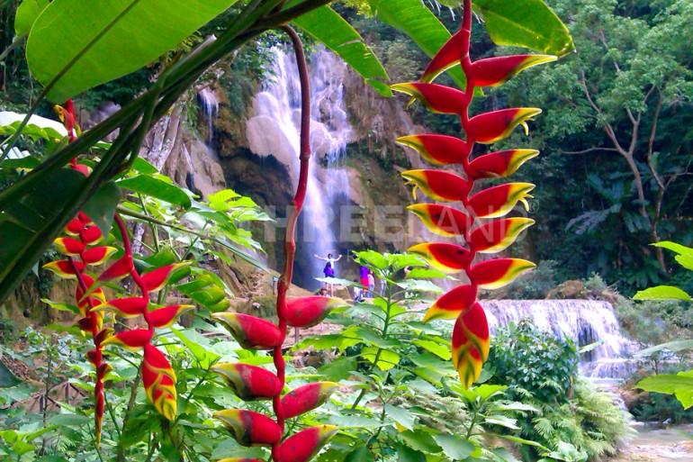 Banana flower at Khoang Si waterfall